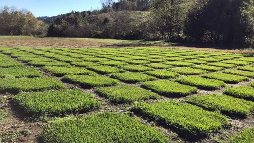 Turfgrass research plots