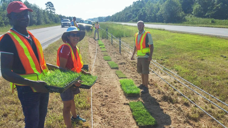 Susanna Milla-Lewis planting turfgrass along roadside
